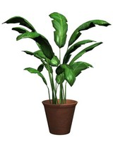 Houseplant_MayaV.zip