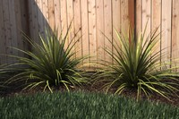 Ornamental Grass 4 - Maxwell Ready