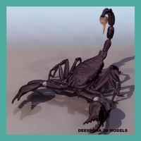 scorpion arachnid scorpionida max