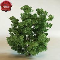 3d model of shrub Schefflera arboricola 'Trinette'