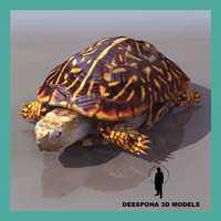 3d model terrestrial turtle terrapene ornata