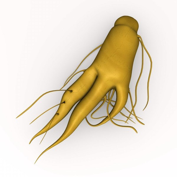 ginseng root 3d 3ds - ginseng... by 3DMB