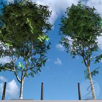 studios arboles trees max
