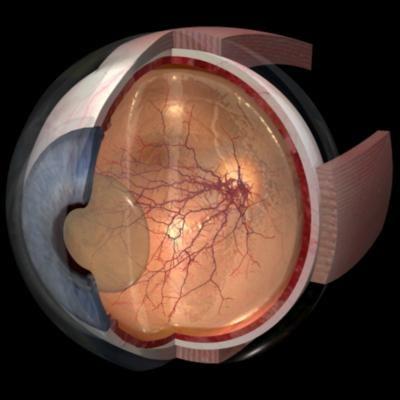 EyeSegPersp.jpg