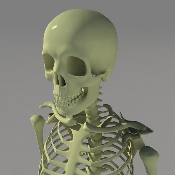 human_skel_skull_600.jpg