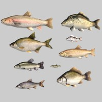 3d model fish carp pike salmon