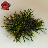 3d juniperus virginiana 'silver spreader'