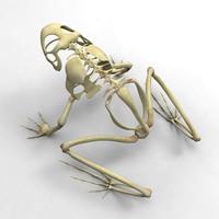 3d frog skeleton model