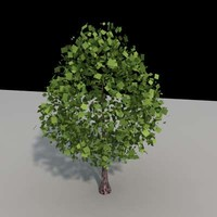 3d tree architectural model