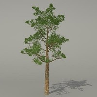 conifer tree 3d max