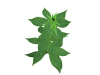 inula plant real 3d max