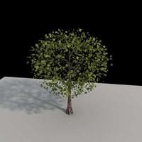 tree architectural max