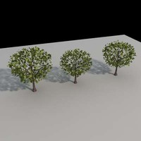 Tree-Collec-02vray.max