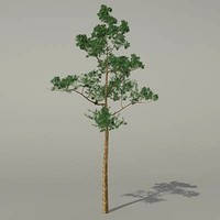 3d model conifer tree