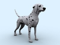 Dalmatian_Dog