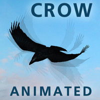 Crow Animated