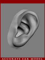 Ear Hyper-Real anatomical model