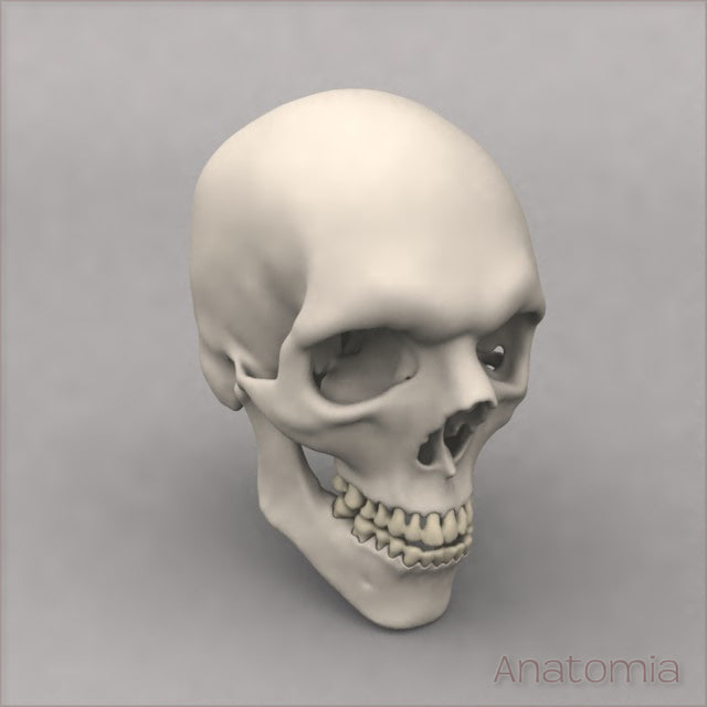 Skull_3Qtr.jpg