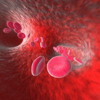 circulatory animation blood cells 3d model