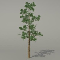 conifer tree 3d 3ds