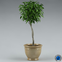 plant with flowerpot_01