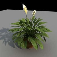 3d model small palm interior