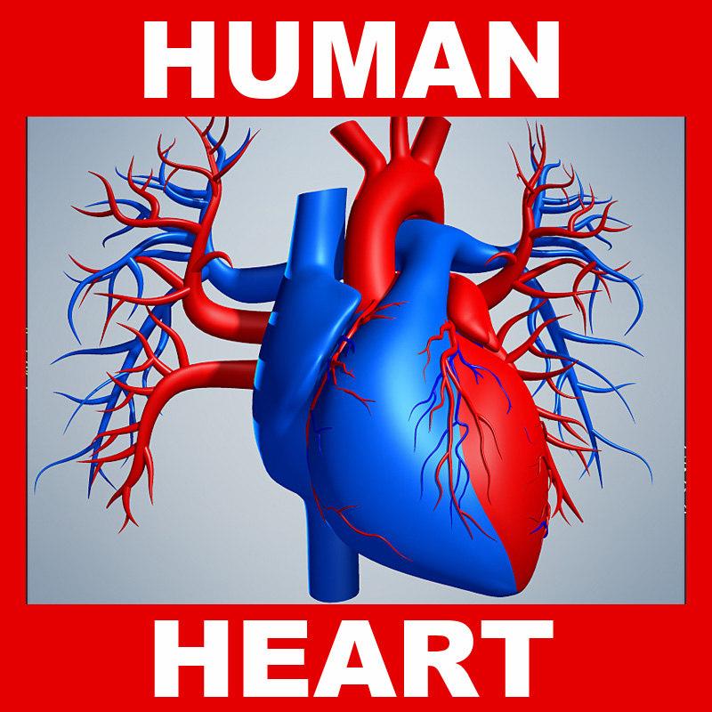 Human_Heart.jpg