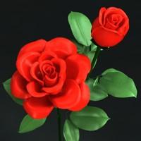roses flower max