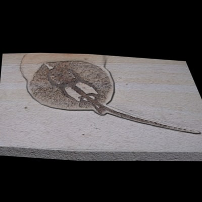 3d model fossil sting - 3D Fossil Sting Ray... by Digital Reflection