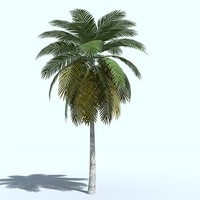 Palm_tree_101.zip