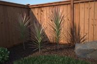 3dsmax renderings ready tree -