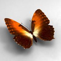 butterfly butt 3d model