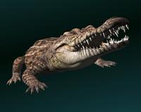 Crocodile-V2