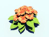 Orange Impatien Flower