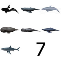 3d sea animals whales orca