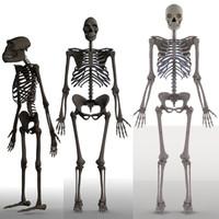 skeletons homo erectus australopithecus 3d max