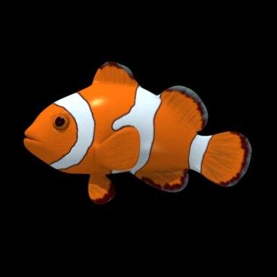 anemonefish.max