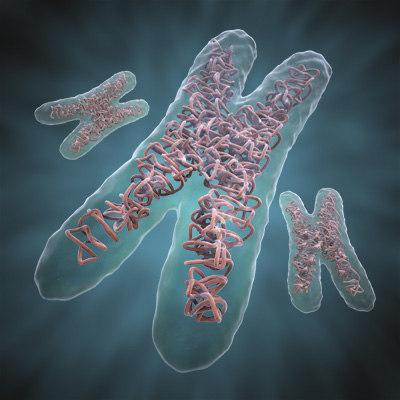 chromosome_02.jpg