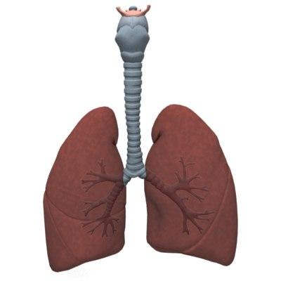 lungsB.jpg