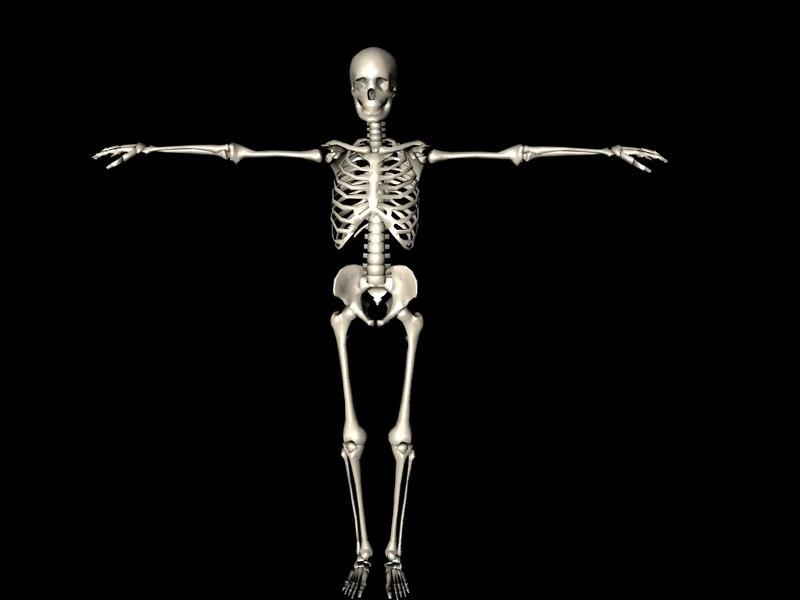 maleskeleton.jpg