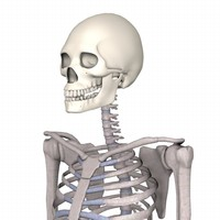 3d model female skeleton