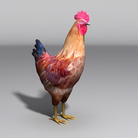 rooster fowl max