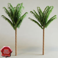 3ds arenga pinnata palm