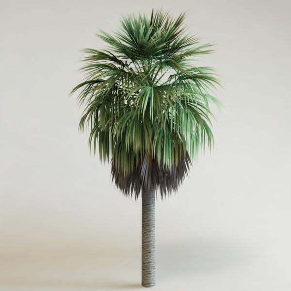 washingtonia robusta palm 3d model. Black Bedroom Furniture Sets. Home Design Ideas