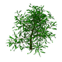 3ds max elm tree