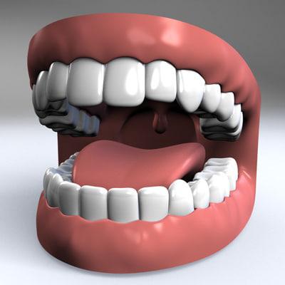Teeth in human mouth