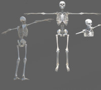 medically skeleton 3d obj