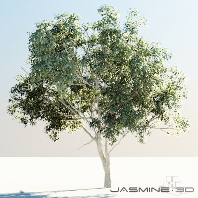 3d tree pimienta dioica model - High Poly Tree (Pimienta Dioica)... by jasmine3d