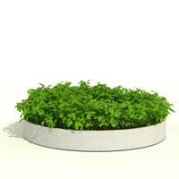 Low plant