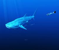 whale shark 3d model